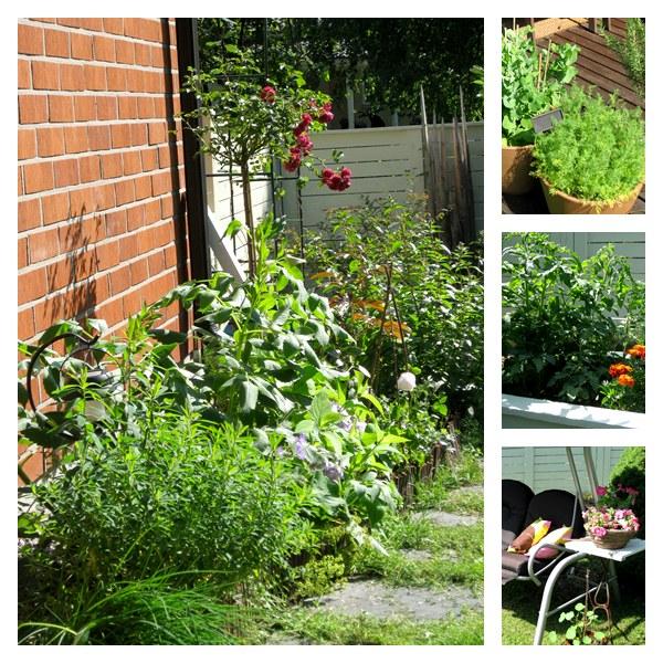 puutarha garden
