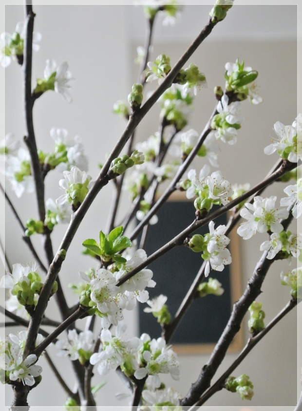 cherrytree branches / kirsikankukan oksat maljakossa