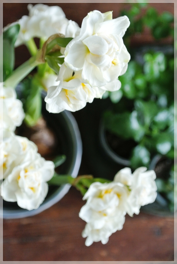 Flowers/kukat