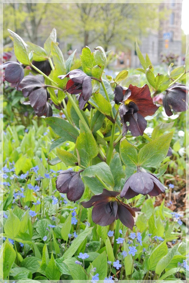 Tukholma, flowers, kukka, puutarha