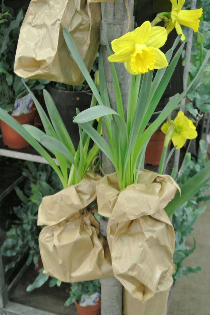 Kevätmessut, garden, puutarha